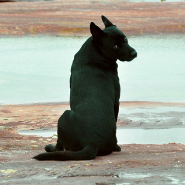 dog_beach_round